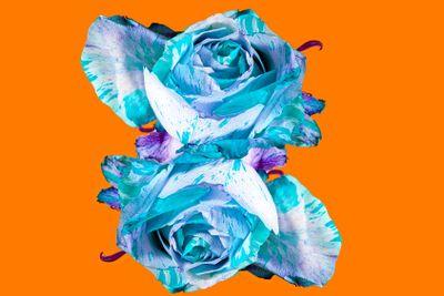 flora : rose