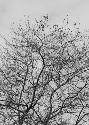 A minimalistic shot of a tree over a bright background...