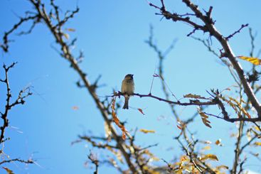 Sparrow sitting in the branches of a tree