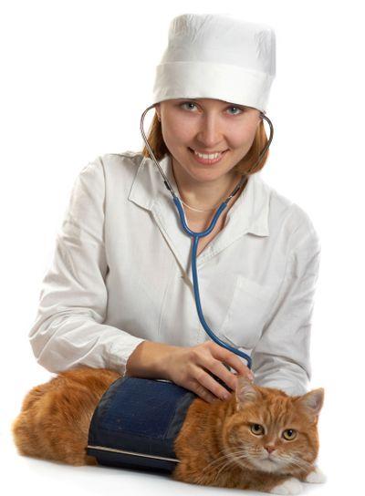 Female veterinarian whit cat