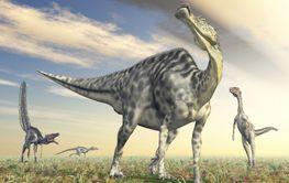 Velafrons and Velociraptor