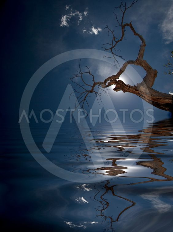 Water and tree