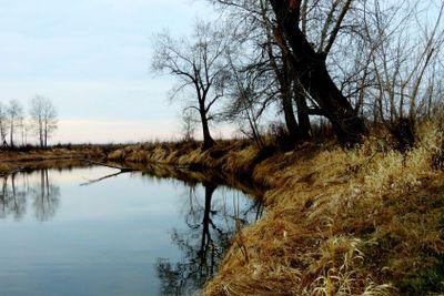 На  берегу  речки.