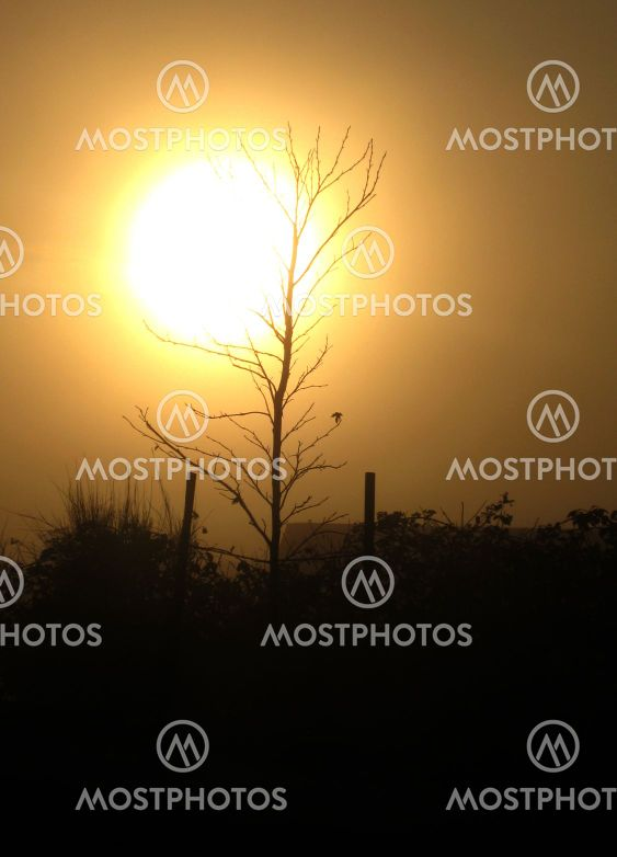 Sun and Tree Sillouette Background v1