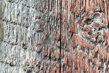 Knot in wood.Texture with knot for background.