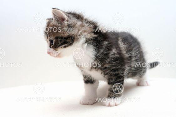 kitten 04