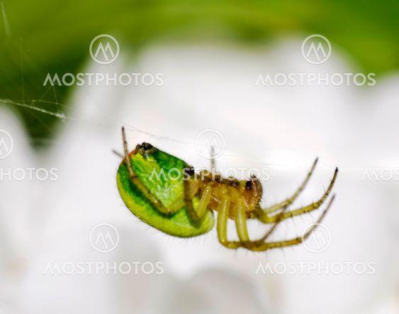 Grønne spider arbejder
