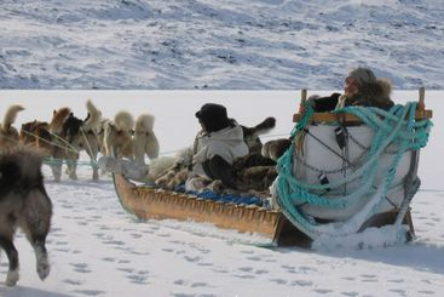 Dog sledge in Greenland