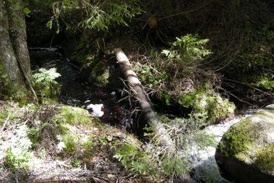 Creek in Småland forest