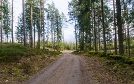 Grusvägen genom skogen