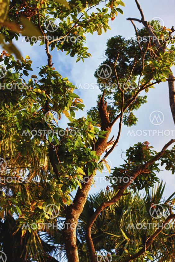 Thailändska djungeln