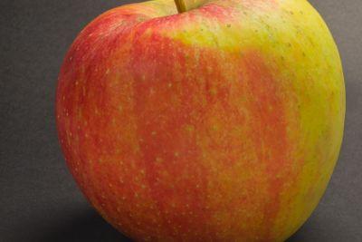 Apple varieties CHAMPION