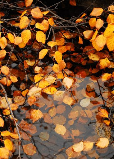 Foliage in water