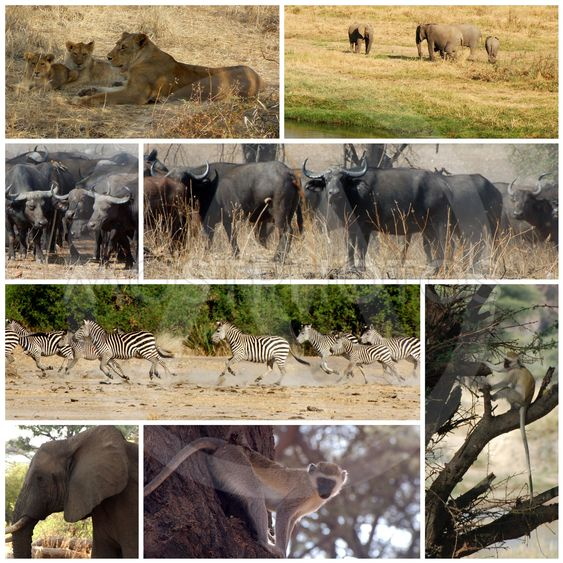 Images from savannah - Tanzania - Africa