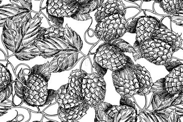 Hop vector seamless pattern.Black hand drawn artistic...