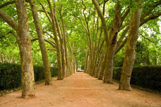 Sökvägen till träd