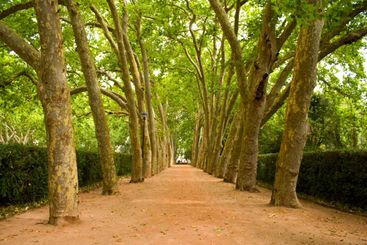 Path of trees