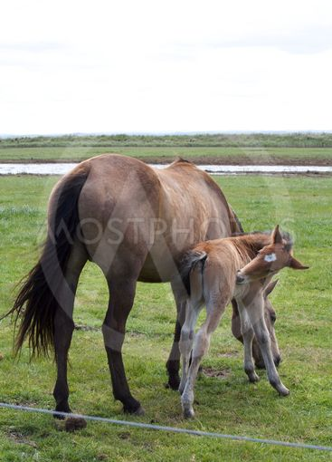 A Young Horse and Foal