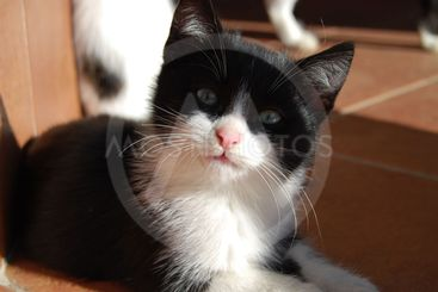 A simpatic cat