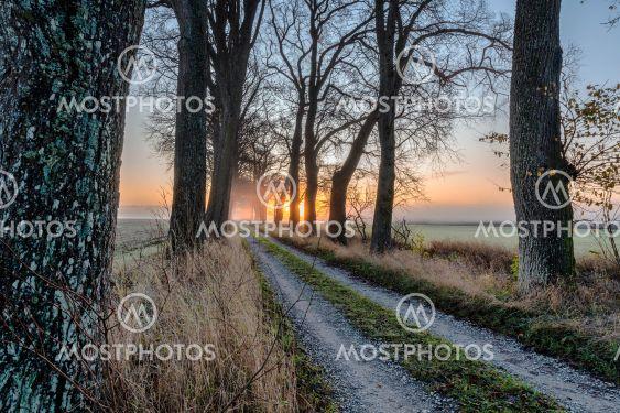 Morgondimma på Gotland