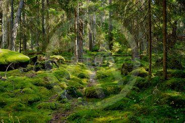 Storskogen