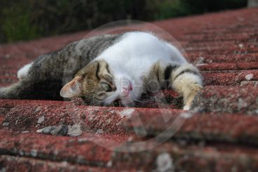 Cat on the roof 6