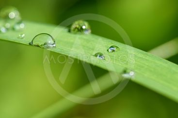 Dew on the grass. Beautiful natural colored background....