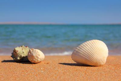beach with seashelsl near sea