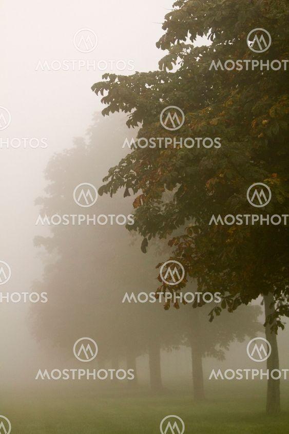 Trees in mist