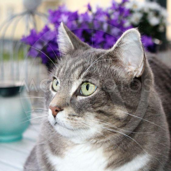 Katt med gröna ögon