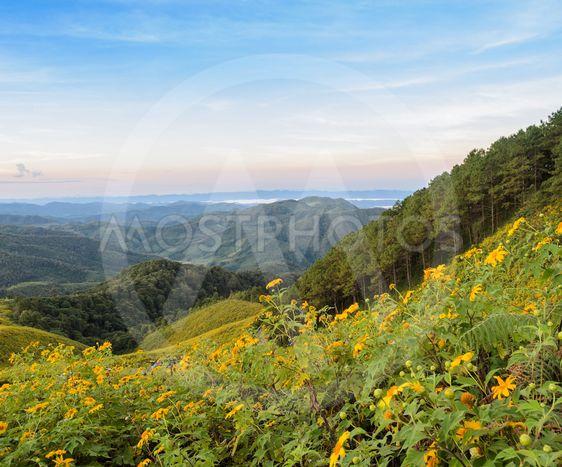 Beautiful mountain sunrise nature scene with wild...