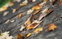 autumnal leaves on wooden bench in urban park