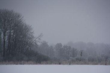 Frosten och strandskogen