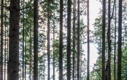 Träden i Skogen