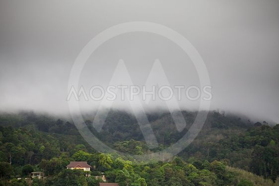 Nojalla Rain Forest
