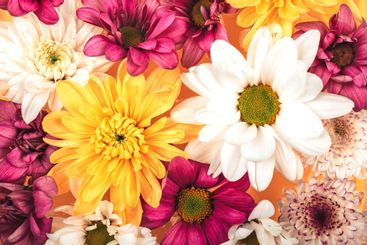 Background of beautiful different flowers, beautiful...