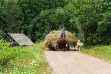 Travel on a horse from a haymaking.