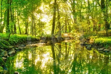 Green forest park with water stream