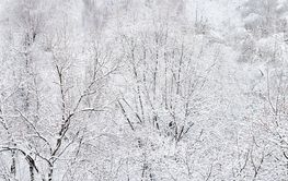 panorama of the winter forest