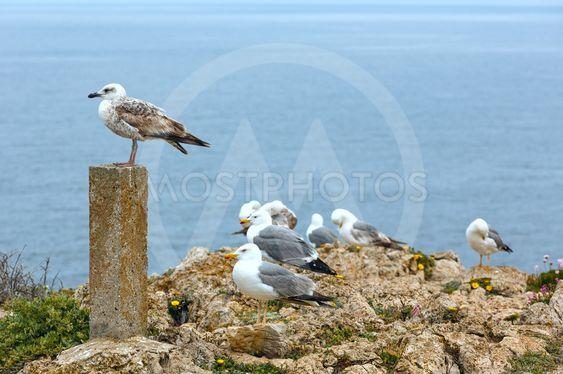 Seagulls on sea background.