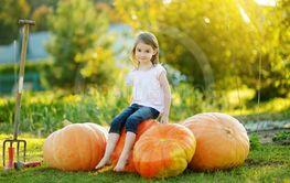 Cute little girl having fun with huge pumpkins on a...