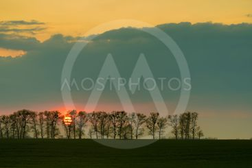 Sun during sunset behind trees