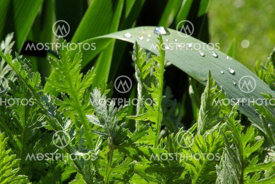 Wassertropfen auf Blatt - waterdrop on leaf 05