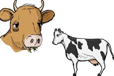 Cow Profile