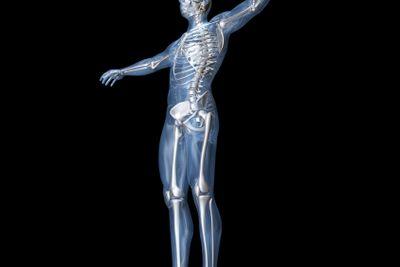 Anatomy Visualization