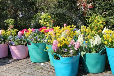 Sunny terrace with a lot of flowers