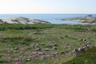 Labyrint Rörö