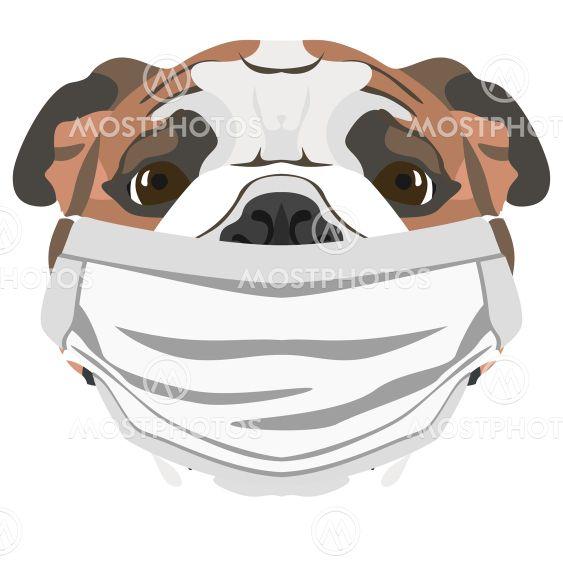 Illustration dog English bulldog with respirator