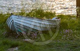 Gammal vit roddbåt i gräset på stranden