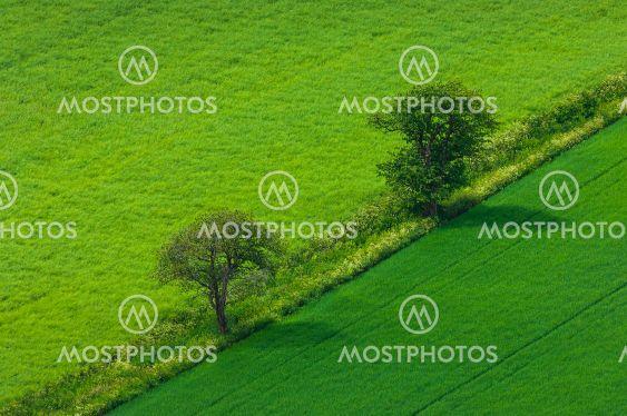 Trees standing  between farmlands, Sweden